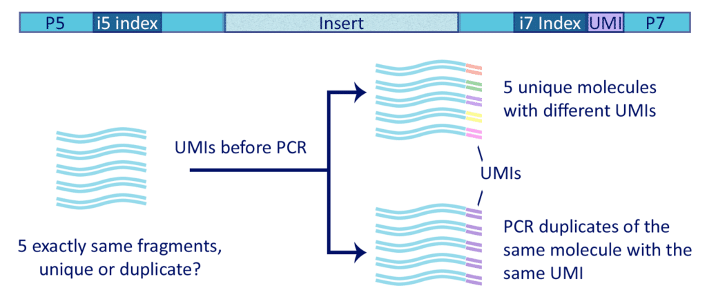 graphic UMIs 1 1024x430 How to solve major sequencing pitfalls with Unique Molecular Identifiers (UMIs)