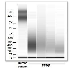 DNA degradation diagram EpiRestore: restore all low integrity DNA