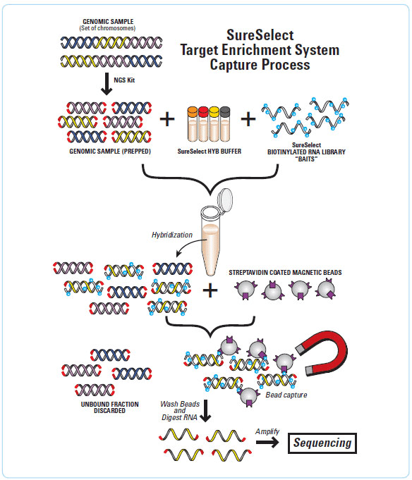 SureSelect2 Targeted Sequencing